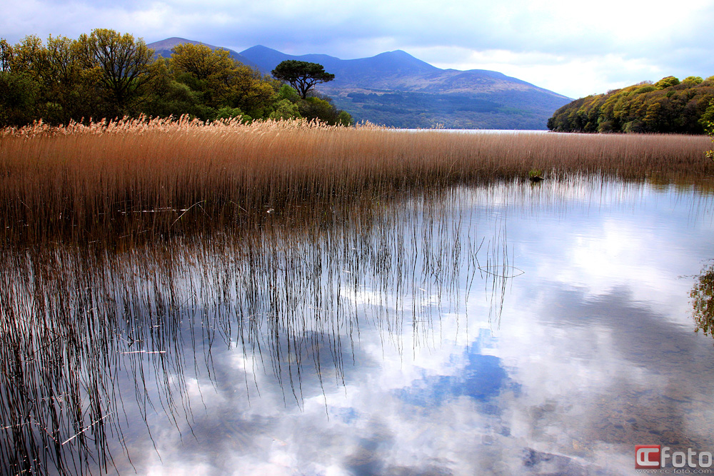 Lough Leane @ Ross Island